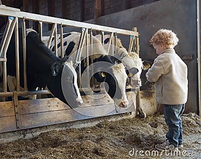 Jonge landbouwer en koeien