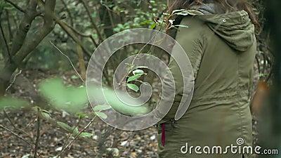 Jonge vrouwengangen onder de takken van het bos in de winter stock videobeelden