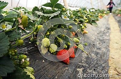 Jordbrukskjullantgård