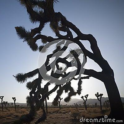 Free Joshua Tree Stock Images - 15864884