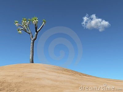Joshua tree on a dune