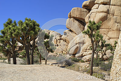 Joshua Tree Hidden Valley Rock Formations