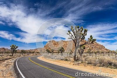 Joshua Tree Road