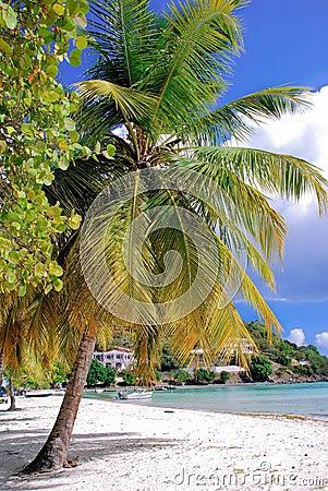 Jost Van Dyck British Virgin Islands