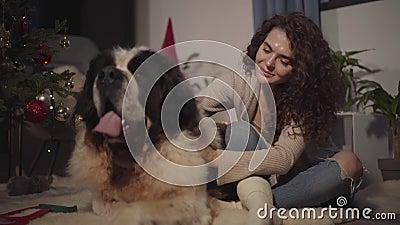 A jovem linda mulher que trava o grande cão de guarda de Moscou sentado ao lado da árvore de Natal Garota feliz passando Ano Novo filme