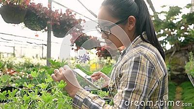 Joven jardinero asiática que usa smartphone para trabajar en invernadero Conceptos de utilización de la tecnología en la agricult metrajes