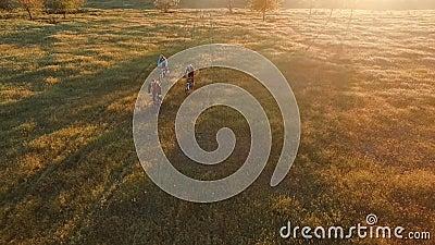 Jovens que dão um ciclo em bicicletas através do campo verde e amarelo do prado do verão filme