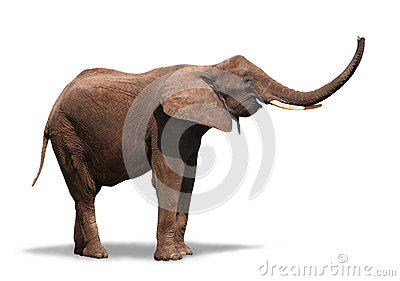 Joyful Elephant  on White