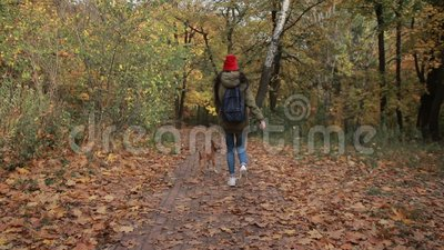 Joyful girl with dog running in autumn park stock footage