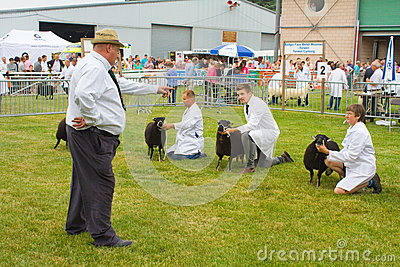 Judging Torfaen sheep at the Royal Welsh Show Editorial Stock Photo