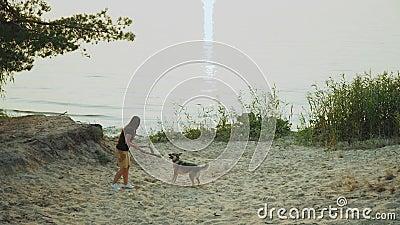 Juego feliz con su perro mixbreed en el bosque del pino cerca del río grande, cámara lenta de la mujer joven almacen de video