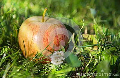 Juicy apple in the grass