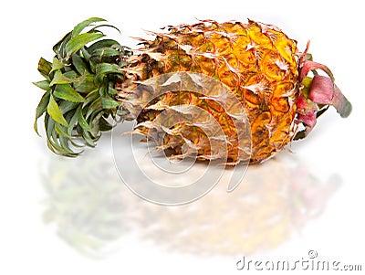 juicy pineapple still in it s skin