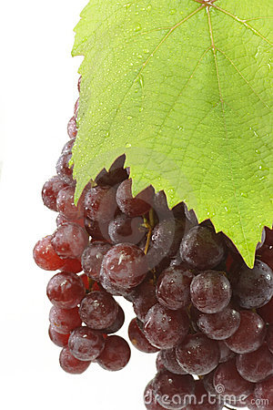 Free Juicy Red Grapes Stock Photo - 4187200