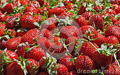 Juicy ripe strawberrys