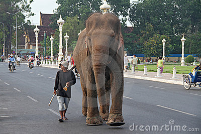 Jumbo in Phnom Penh Editorial Stock Image