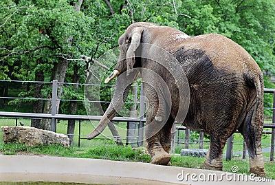 Jumbo Sized Elephant