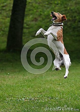 Free Jump 2 Royalty Free Stock Photo - 2099385