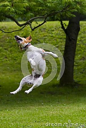 Free Jump Royalty Free Stock Photos - 2099298