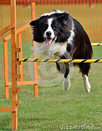 Jump agility