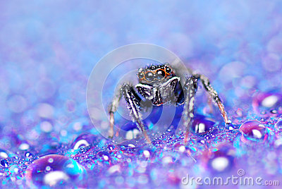 Jump Spider Royalty Free Stock Image - Image: 24887906