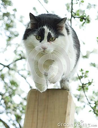 Jumping cat