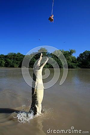 Jumping Crocodille, Kakadu, Australia