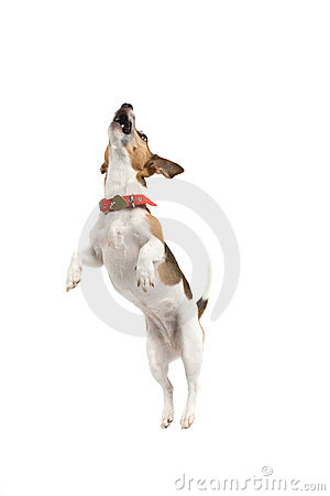 Free Jumping Dog Royalty Free Stock Photo - 2865935