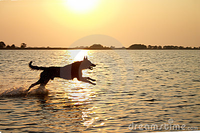 Jumping dog in the sea