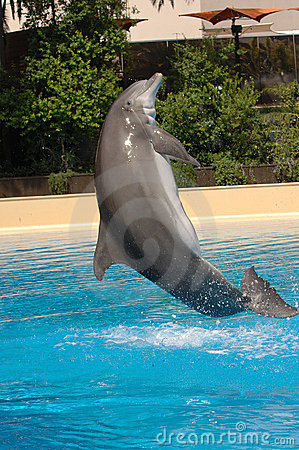 Free Jumping Dolphin Royalty Free Stock Photo - 2961205