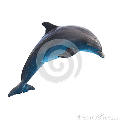 Free Jumping Dolphin On White Royalty Free Stock Photo - 42948655