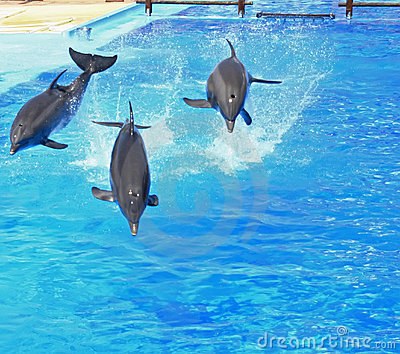 Jumping dolphin trio