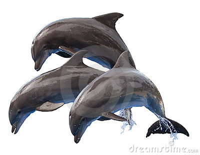 Jumping Dolphins Isolated