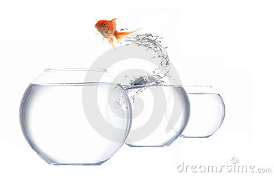 Jumping golden fish