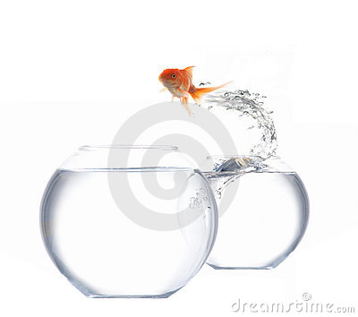 Jumping goldfish