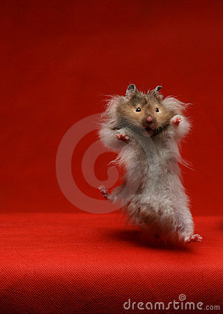 Jumping  hamster - mouse