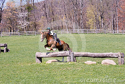 Jumping horse in field