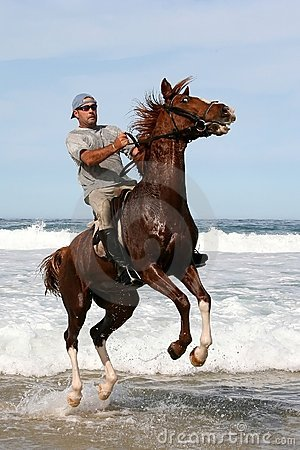 Jumping Horse in sea