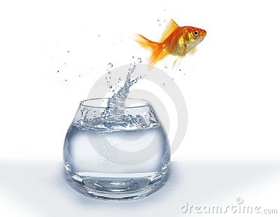 how to add fish jumping to a video