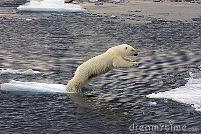 Jumping Polar bear cub