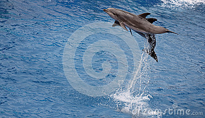 Jumping up dolphins