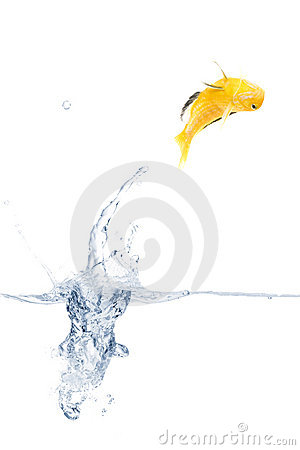 Jumping yellow fish