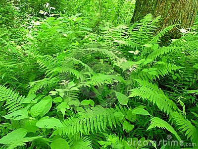 June Lush Ferns
