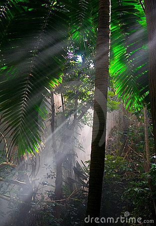 Free Jungle Royalty Free Stock Photography - 11600407