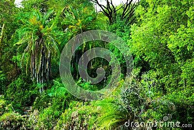 Jungle, bush trees background in Africa. Tsavo West, Kenya