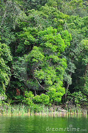 Jungle Coast