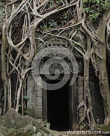 Free Jungle Doorway Royalty Free Stock Photos - 12814628