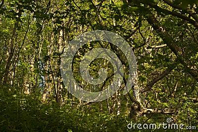 Jungle evening sunlight