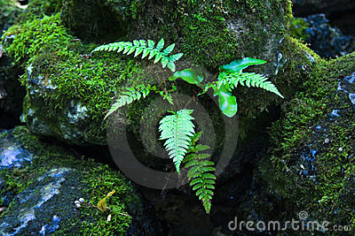 Jungle fern