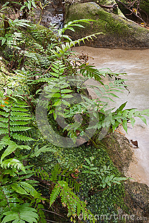 Free Jungle Fern Stock Images - 50847824